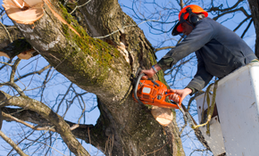 $3,420 for a 3-Person Tree Crew for a Day-Including Bucket Truck and Wood Chipper