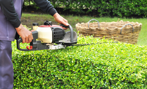 $129 for a Lawn/Landscape Maintenance Package