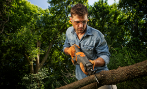 $460 for 2 Tree Service Professionals for a Half Day