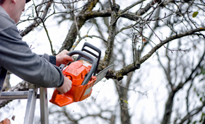 $2,199.00 for a 6-Person Tree Service Package (7 hours)