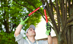 $320 for 4 Labor Hours of Tree Trimming Services