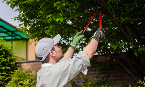 $1,499 for a Professional Tree Crew, Chipper Truck and Debris Removal for a Half Day