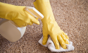 $80 for Carpet Cleaning and Deodorizing for 3 Rooms