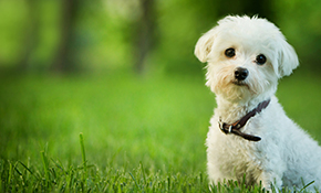 $147 for 3 Months of Pet Waste Removal Service