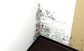 $299 for Mold Assessment, Mold Report and 2 Samples