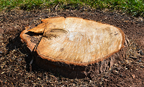 $180 Stump Removal Service