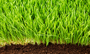 $265 for Lawn Aeration and Overseed
