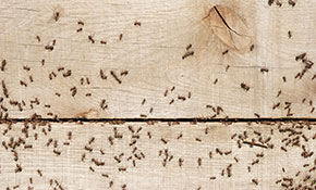 $599 for a 12-Month Pest Control Package - Up to 3,000 Square Feet
