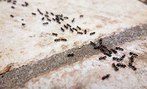 $179 for Any Season Preventative Pest Control Treatment