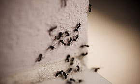 $490 for a Quarterly Pest Control Package