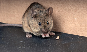 $134 Rodent Exclusion Inspection and Trap Installation