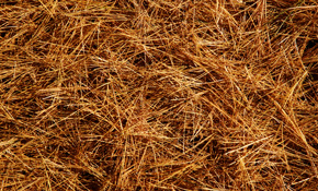 $300 for 50 Bales of Long-Needle Pine Straw, Delivered and Installed
