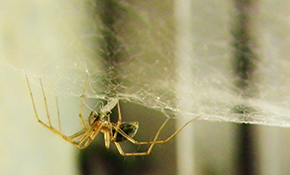 $99 for Interior/Exterior Spider Treatment and Web Removal