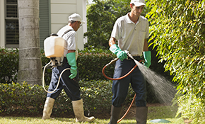 $499.99 for a 12-Month Pest Control Package