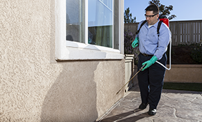 $850 for a 12-Month Pest Control Package