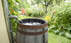 $250 for Installation of a Water Saving Rain Barrel, Materials Included