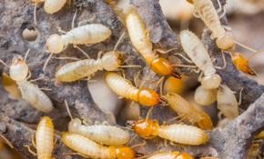$1,050 for a Sentricon Preventative Termite Treatment System