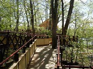 Ramp leading to a Forever Young treehouse