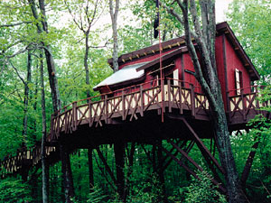 A Forever Young Treehouse perches in the forest