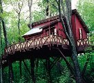 A Forever Young Treehouse