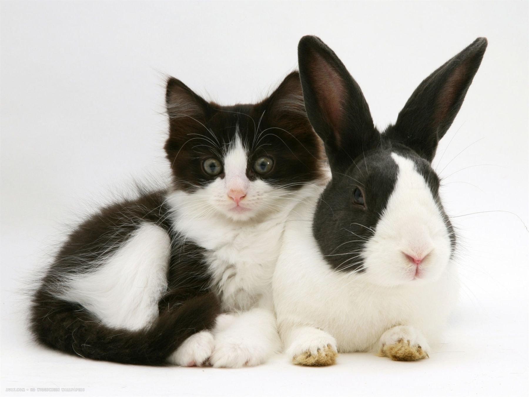 итоге получите красивой фотографии кошки кроликов штамбовый куст