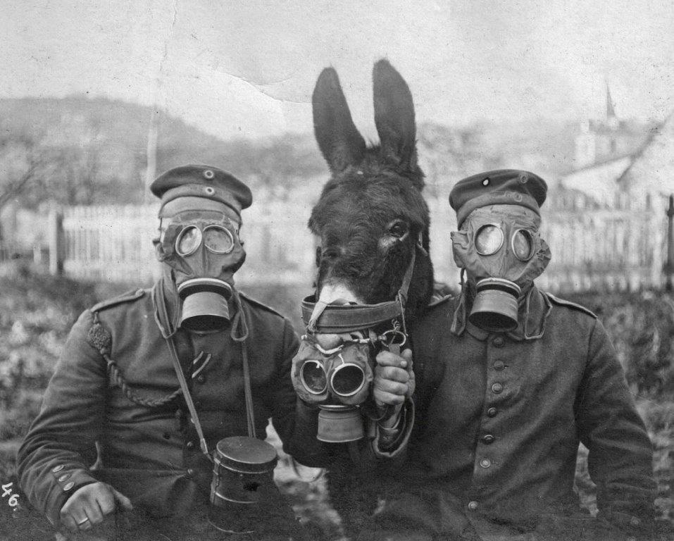 11 novembre 1918 : 10 choses à savoir sur les animaux et la Grande Guerre