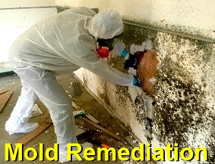 [city] Mold Removal [zip]