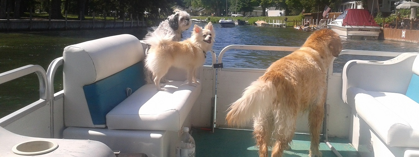 The dogs love to go boating