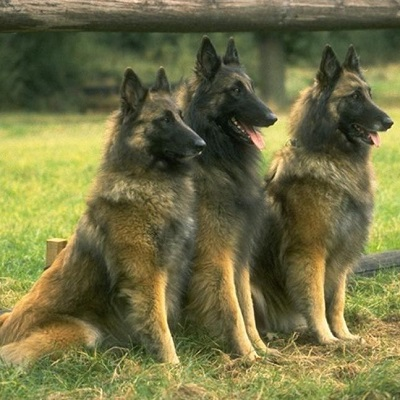 Top Dog Breeders experts