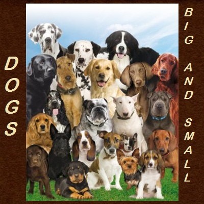 Dogs for sale in Deming New Mexico