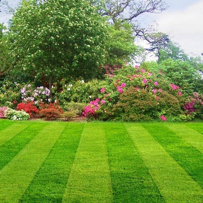 Professional Local Landscaping Services