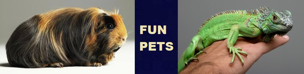 Fun pets at pet stores