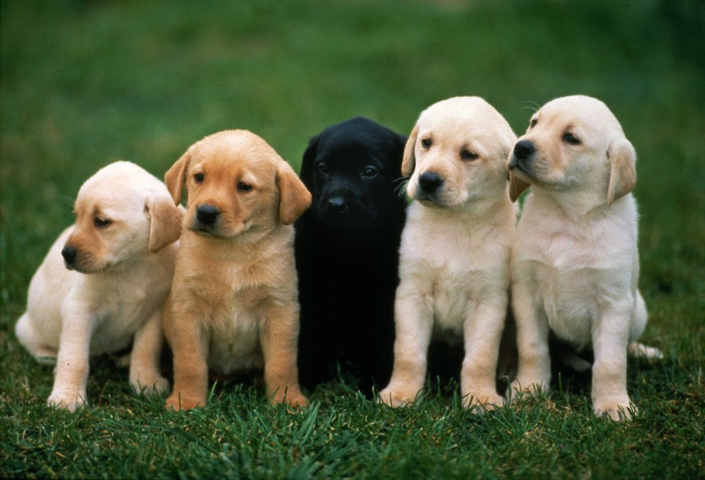 Cute puppies dog boarding