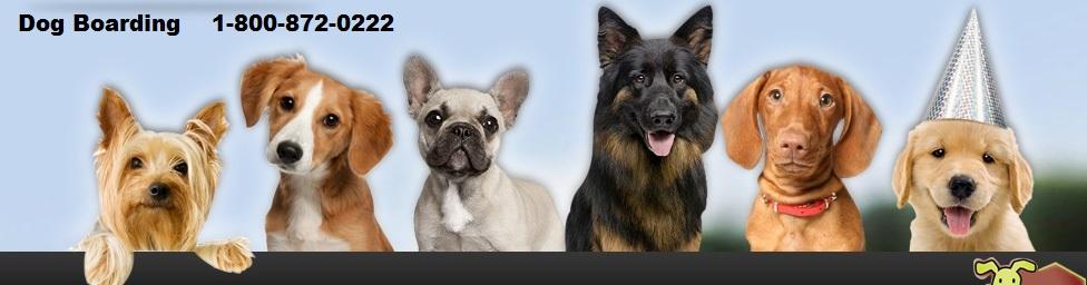 Pet Boarding options