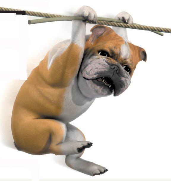 Dog boarding fun