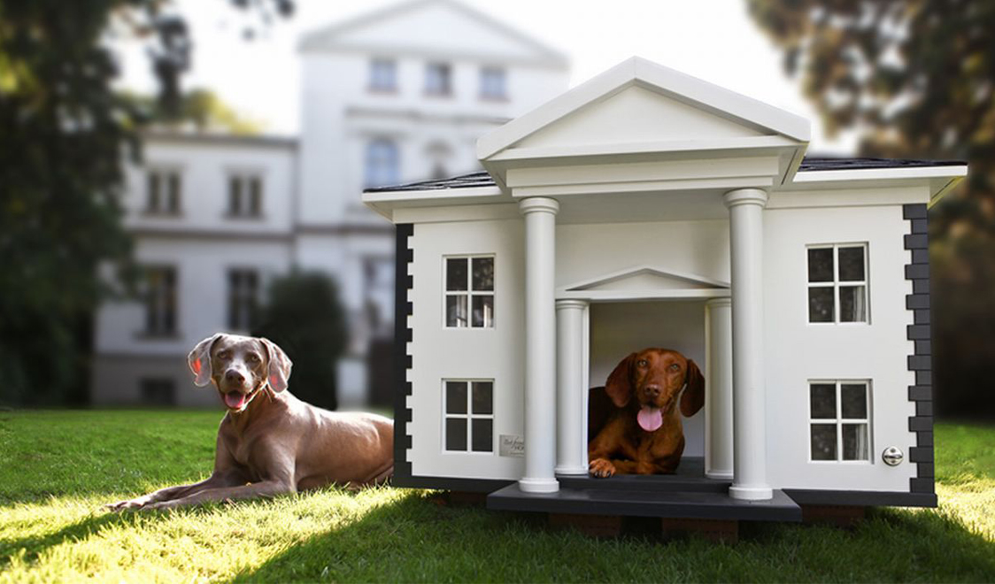 Best pet hotels