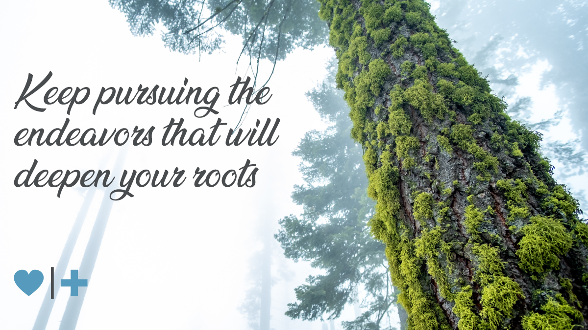 affairrecovery-survivors Blog-Elizabeth-Roots-Pt-1-keep pursuing the endeavors that will deepen your roots