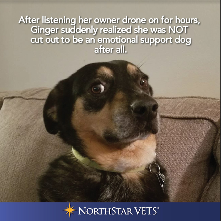 emotional support dog not cut out for it