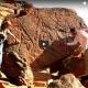 Saharan Rock Art In Peril