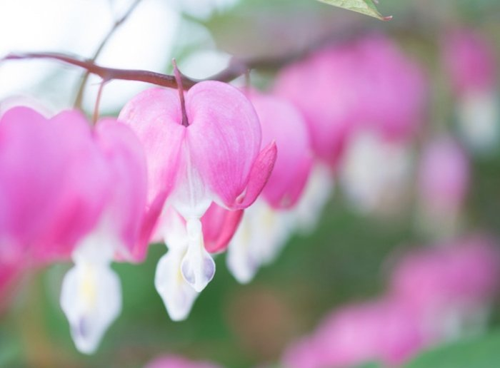How To: Photograph Spring Flowers, Mimic the Sun with a Single Light, Shoot the Moon, and More