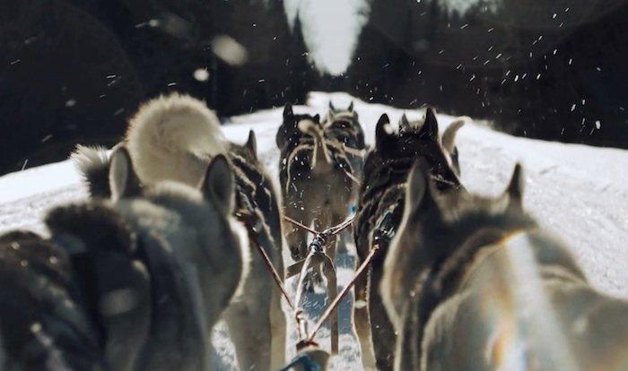 AI-AP | Motion Arts Pro » Spotlight: Snow, Family and the Joy of Dogsledding