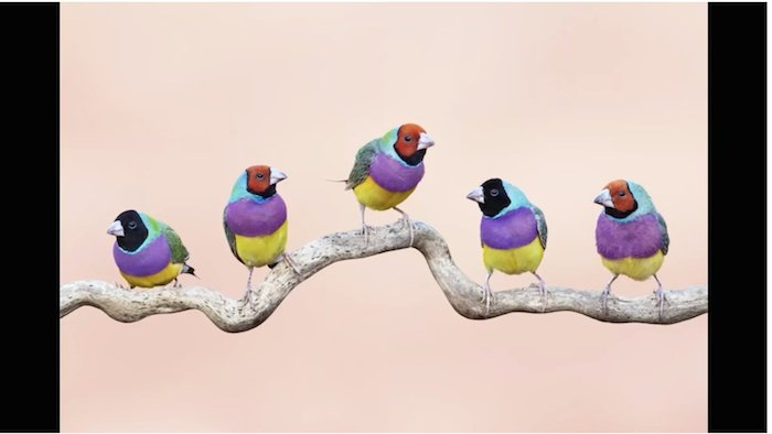 Insight: Better Ways to Photograph Birds