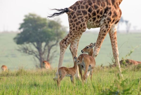 Nature Watch: How To Photograph Wildlife Ethically