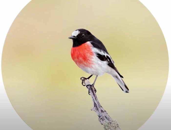 Insight: Make Your Bird Photography Better