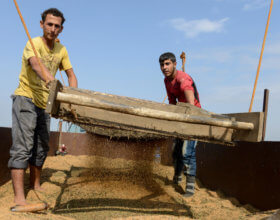 Syrian refugees thresh sesame for a Turkish farmer (Photo: Alamy.com).