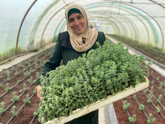 Plants grown at a community hydroponic farm in Jordan (Photo: ECO Consult).