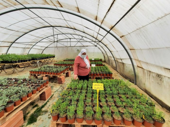 Safaa Kumari working at an Icarda plant research facility in Tunisia. She brought her research to Tunisia in 2012 after fleeing her native Syria (Photo courtesy of Safaa Kumari).