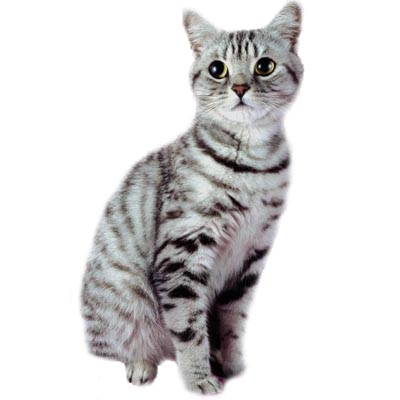 chat en anglais