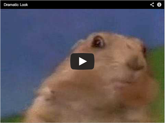 Scared Groundhog Video