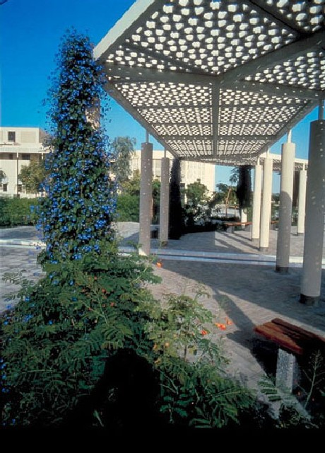 Sultan Qaboos University Landscaping | View along courtyard